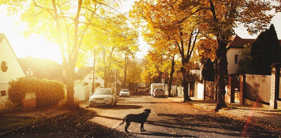 Zonnige straat huizen zonnepanelen huren in de zon